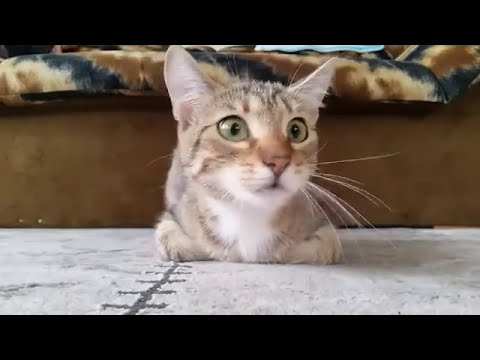 Cat Reacts to Horror Movie