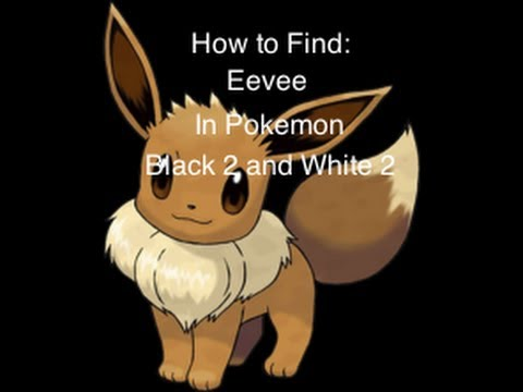 How to find an Eevee in Pokemon Black 2