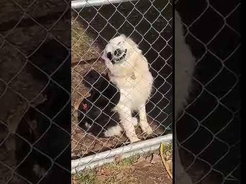 Beware of Dog at the Gate  -  981938