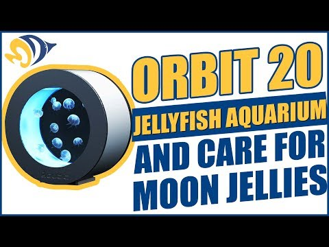 How to Set Up an Orbit 20 Jellyfish Aquarium and Care for Moon Jellies