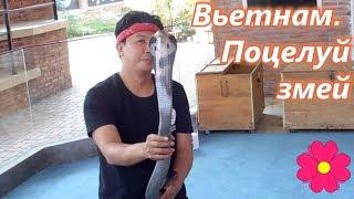 Вьетнам.  Поцелуй змей (Шоу змей в Нячанге)