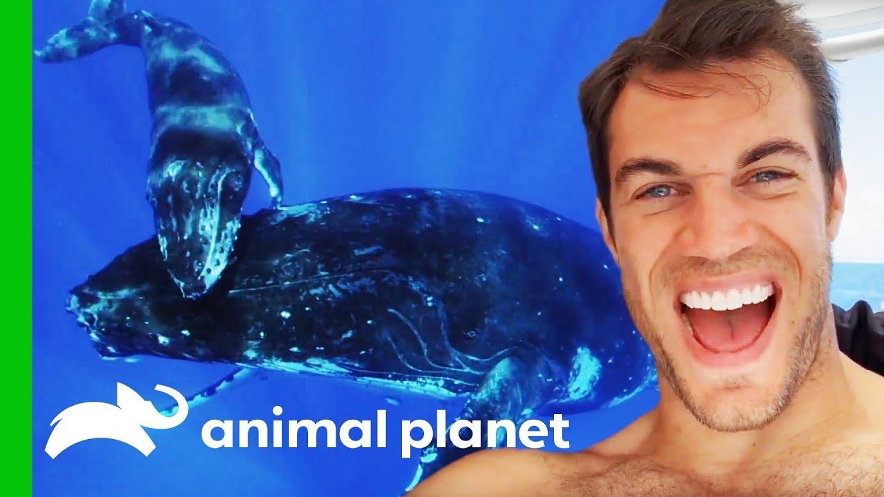 Dr. Evan Antin Swims With Incredible Humpback Whales In Tahiti   Evan Goes Wild