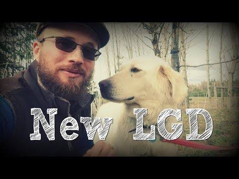 Introducing and Integrating Our New LGD onto Our Homestead