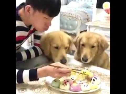 Dog Eating with Owner