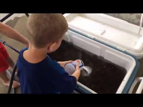Johnny and Jaxson cleaning crawfish