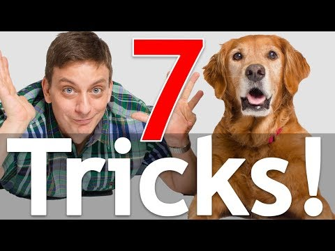 7 Dog Tricks in 5 Minutes!
