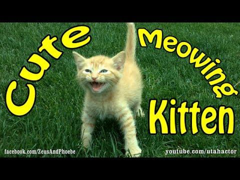 Lost, Meowing Kitten is Rescued!