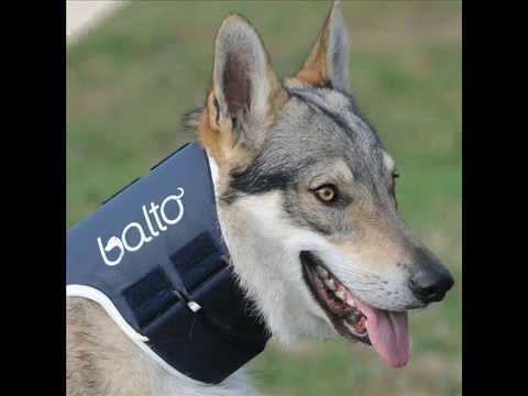 ORTHOPAEDIC BRACES FOR DOGS, SUPPORT, RECOVERY 100% MADE IN ITALY