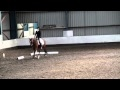 Download  Midarc Young Rider's Dressage Prelim 18 - Aug 2010 - Issy + Davey (2nd test) MP3,3GP,MP4
