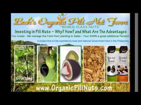 Pili nut benefits medicinal food cosmetics oils aroma oils elemi oil candy investment