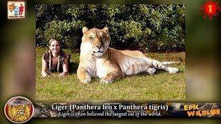 13 Amazing Animal Hybrids