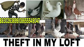 THEFT IN MY LOFT MUMBAI.ALL MADRASI PIGEION AND SOME  HIGH FLYER PIGEON.CALL WHEN FOUND.8830263699