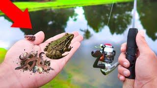 Download Finding FROGS & GRUBS For LIVEBAIT Fishing Challenge (WALMART) Video
