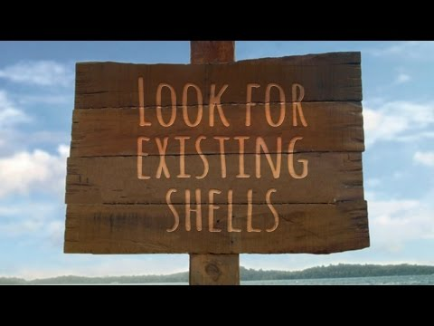 The Perfect Shell-ter (Look at existing shells)