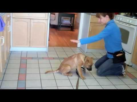 Puppy Foundation Skills Part Three: A Pro-active Approach to Puppy Nipping