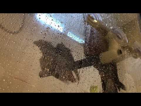 Parrots in The Shower