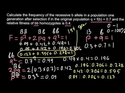 How to calculate allele frequency  in the F2 generation