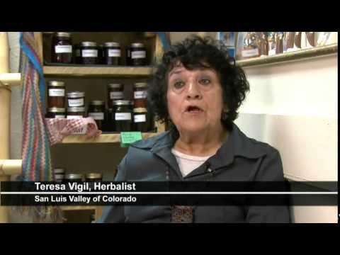 The Medicinal Herb Osha | Tea Pursuit