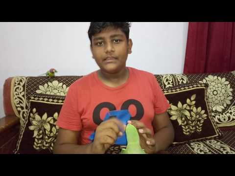 Basic PARROT TRAINING || HINDI