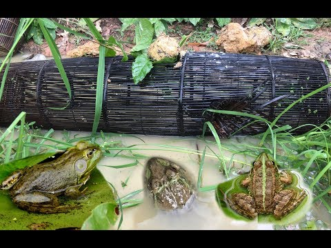 Frog Trap Videos - How to Catch A Lot Of Frogs by Using Cambodia Traditional Trap
