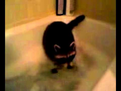 pet raccoon poops during bathtime