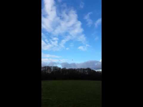 Harris hawk catching bird from soar