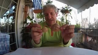 ψαρεμα δολωματα χωρις χρηματα γυαλιστερή αχιβάδα κυδώνι μυδι