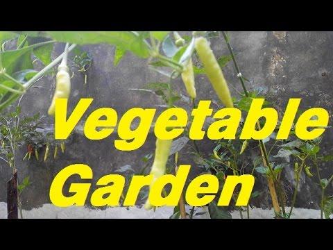 My Small Vegetable Garden