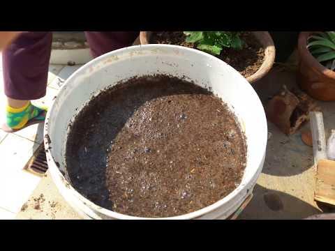 How to make Compost Tea at Home || Compost Tea - Organic Fertilizer || Fun Gardening || 28 Nov, 2017