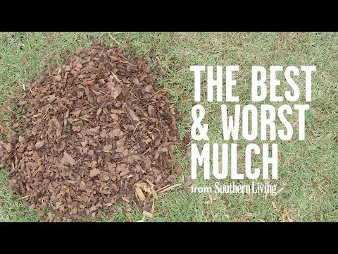 Download The Best and Worst Mulch for Your Garden | Southern Living
