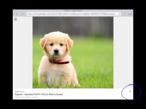 How to find a URL on Google Images (iPad)