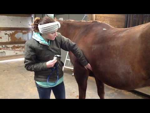 Horse Pulse and Heart Rate