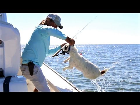 Louisiana Trout & Redfish Fishing ft. This Crazy Cute Dog