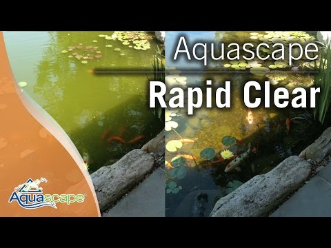 Clear Pond Water with Aquascape Rapid Clear