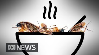 Are you ready to eat insects for lunch? | ABC News