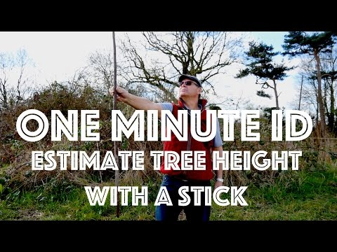 How to Estimate the Height of a Tree using a Stick. One Minute ID