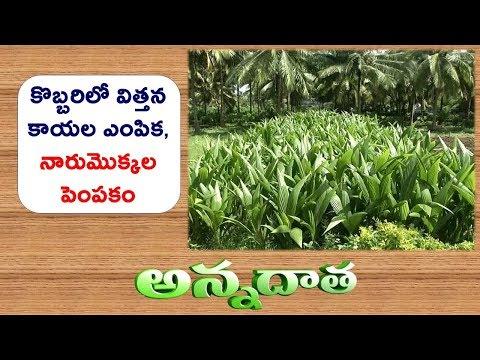 Raising of Coconut Nursery || ETV Annadata