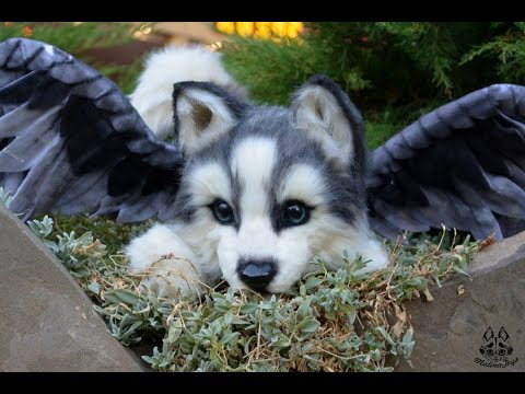 Do u know puppies can fly?