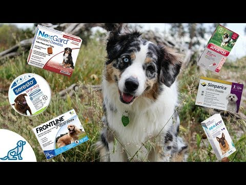 Tick Prevention For Dogs- And Tick Removal