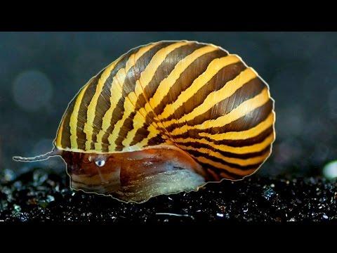 Top 10 Aquarium Cleaners or Bottom Feeders