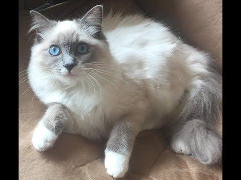 Skittish cat