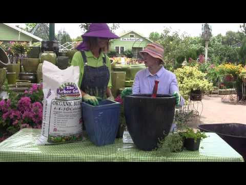 How to Grow Herbs in a Pot with Ann Wheeler