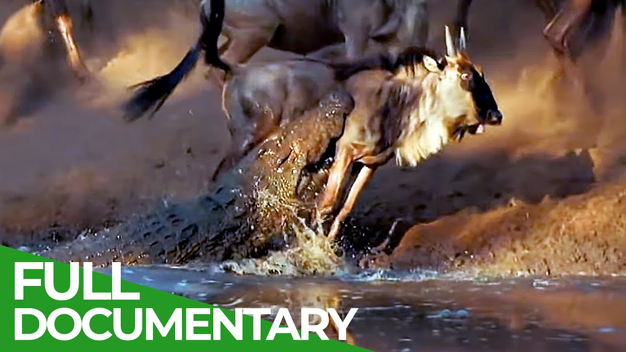 Wildlife Laws: Only the Fastest Will Survive   Free Documentary Nature