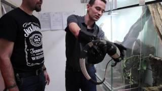 La Ferme Tropicale, Serpents Venimeux Et Varanus Varius &