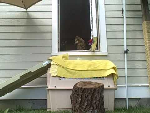 Feral Cats venture outside Part I