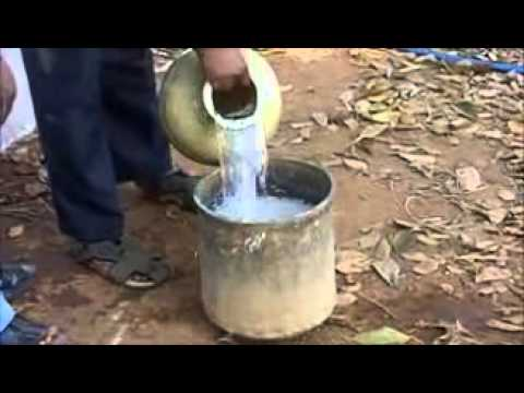 lime water feeding  for cattle-Mysore