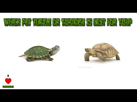 Which Pet Turtle Or Tortoise Is Best For You?   TheAnimalGuyTV