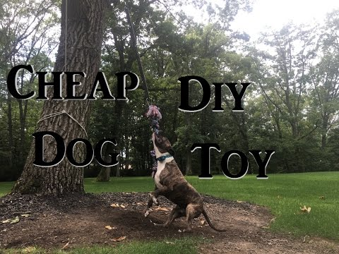 Quick Cheap Diy Way to Keep Your Dog Entertained