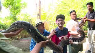 Download BROWNIS - Igon Ko Takut Sama Iguana ??? (10/3/19) Part 2