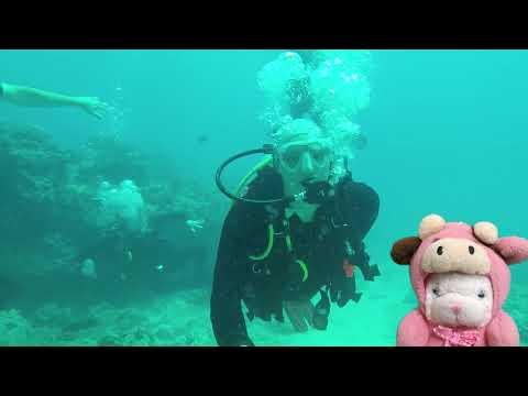 Little T Dives Oahu Hawaii